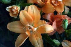 Flores da casa Venda de plantas da casa Fotografia de Stock Royalty Free