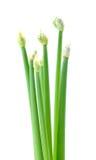Flores da cebola Fotos de Stock Royalty Free