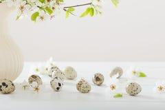 Flores da cereja com ovos Fotos de Stock Royalty Free