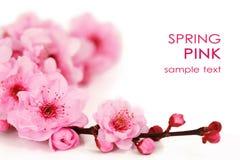 Flores da cereja da mola Fotos de Stock