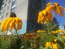 Flores da cidade Fotos de Stock