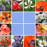 Flores da colagem da mola Fotos de Stock