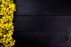 Flores da colza no fundo de madeira preto Imagem de Stock Royalty Free