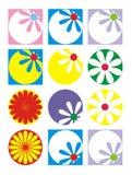 Flores da cor Fotografia de Stock