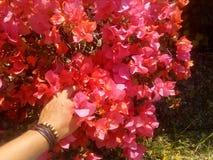 Flores da cor Fotografia de Stock Royalty Free