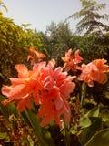 Flores da cor Fotos de Stock Royalty Free