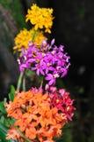 Flores da cor no mais forrest Fotos de Stock Royalty Free