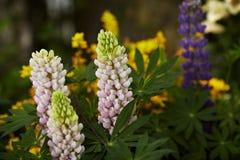 Flores da digital Fotos de Stock Royalty Free
