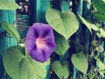 Flores da flor com efeito retro do filtro imagem de stock