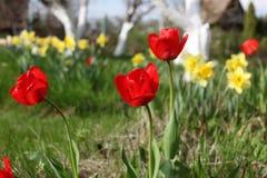 Flores da flor da mola Foto de Stock