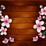 Flores da flor de cerejeira no fundo de madeira Foto de Stock
