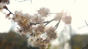 Flores da flor da mola vídeos de arquivo