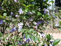 Flores da flora imagens de stock