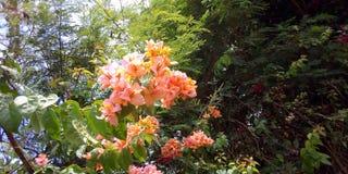 Flores da flora fotos de stock royalty free