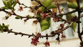Flores da flora e folhas verdes em um ramo em Chipre imagens de stock royalty free