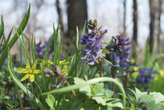 Flores da floresta. Imagem de Stock Royalty Free