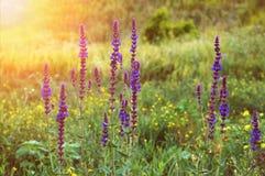 Flores da floresta no fundo da grama verde no sol fotografia de stock royalty free