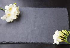 Flores da frésia em fundos pretos Fotos de Stock