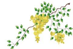 Flores da glicínia - ilustração Imagem de Stock Royalty Free
