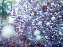 Flores 02 da grama foto de stock
