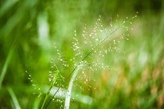 Flores da grama fotografia de stock