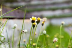 Flores da grama Fotos de Stock
