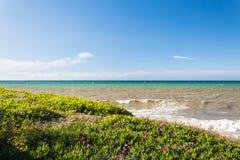 Flores da grama e um mar sujo com ondas em um dia de mola claro fotografia de stock