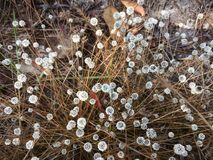 Flores da grama na floresta grande fotografia de stock royalty free