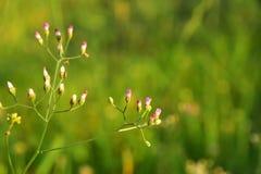 Flores da grama no quintal com fundo do borrão imagem de stock