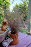 Flores da grama seca foto de stock