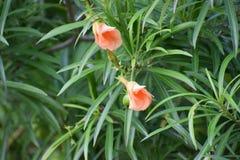 Flores da GT imagem de stock