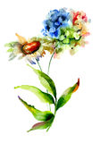 Flores da hortênsia e da camomila Imagem de Stock Royalty Free