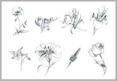 Flores da ilustração Foto de Stock Royalty Free