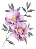 Flores da ilustração da aquarela ilustração do vetor