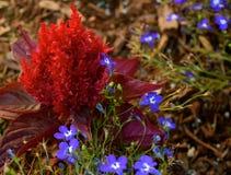 Flores da jarda Imagens de Stock Royalty Free
