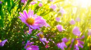 Flores da manhã Foto de Stock Royalty Free