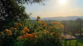 Flores da manhã do verão fotos de stock