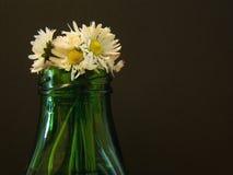 Flores da margarida no vaso imagem de stock royalty free