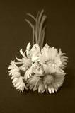 Flores da margarida, sepia fotos de stock royalty free