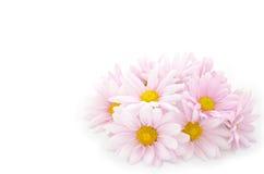 Flores da meia esfera Imagem de Stock Royalty Free