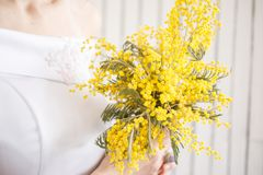 Flores da mimosa nas mãos de uma menina em um vestido branco Fotografia de Stock Royalty Free