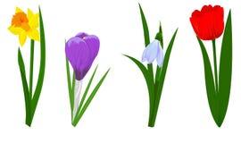 Flores da mola fotos de stock