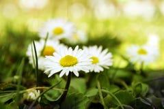 Flores da mola foto de stock royalty free