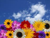 Flores da mola Imagem de Stock