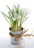 Flores da mola Fotografia de Stock Royalty Free