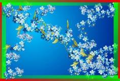 Flores da mola, Fotos de Stock Royalty Free