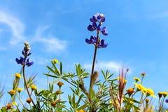 Flores 2 da mola Imagens de Stock
