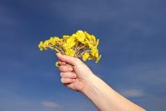Flores da mola Foto de Stock