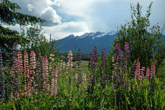 Flores da mola, BC estrada B.C. Canada fotografia de stock royalty free