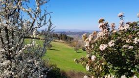 flores da mola Campo Tuscan nos montes do Chianti, It?lia fotografia de stock